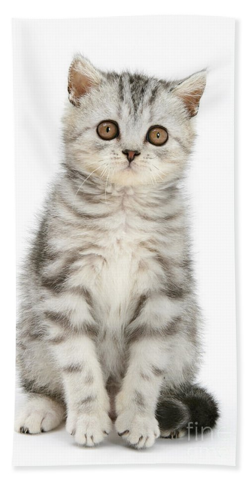 Animal Hand Towel featuring the photograph Tabby Kitten by Mark Taylor