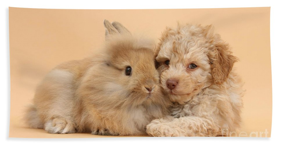 Nature Hand Towel featuring the photograph Puppy And Rabbit by Mark Taylor