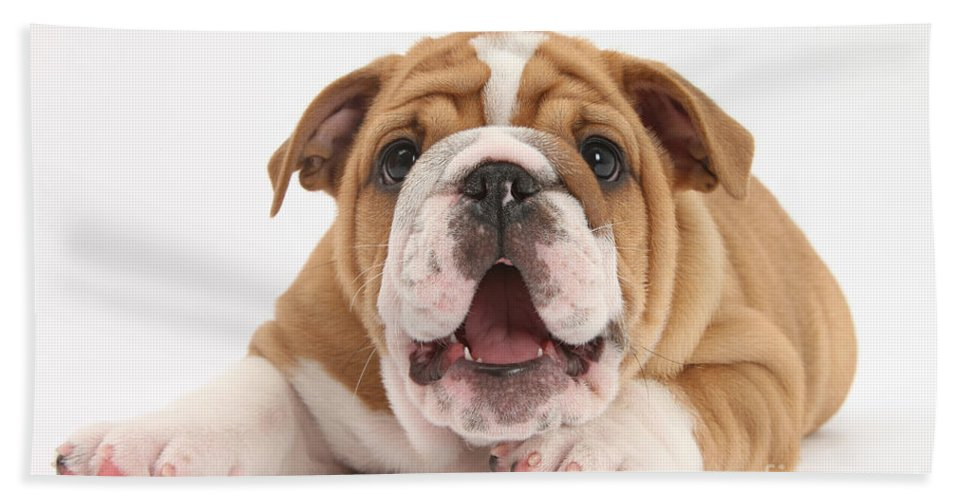 Dog Hand Towel featuring the photograph Bulldog Pup by Mark Taylor