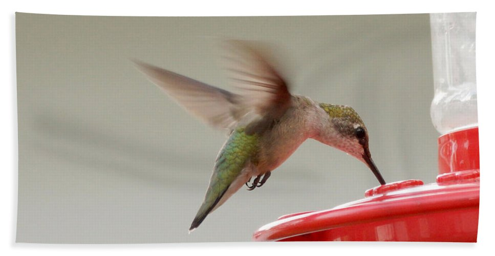 Birds Hand Towel featuring the photograph Hummingbird by Lori Tordsen
