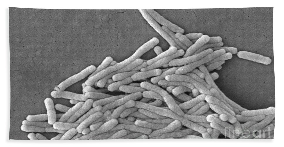 Scanning Electron Micrograph Hand Towel featuring the photograph Legionella Pneumophila by Science Source