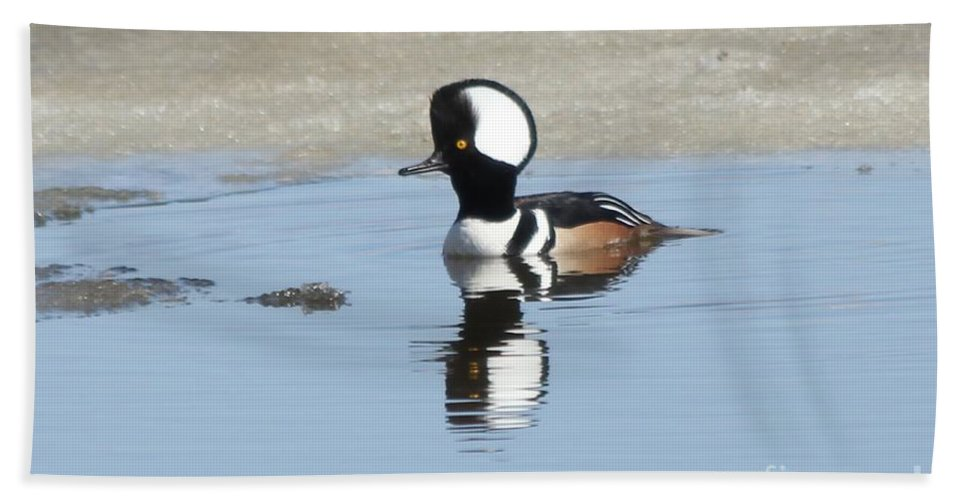Hodded Hand Towel featuring the photograph Hooded Merganser by Lori Tordsen
