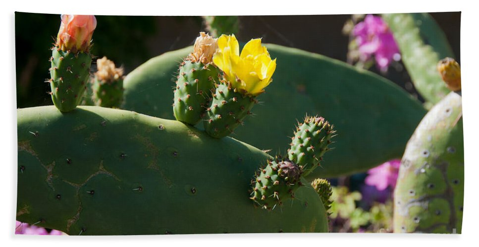 Cactus Bath Sheet featuring the digital art Gardens In Carmel Monastery by Carol Ailles