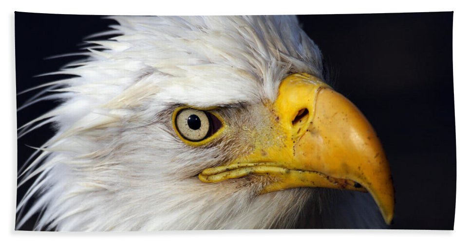 Doug Lloyd Hand Towel featuring the photograph An Eye On You by Doug Lloyd