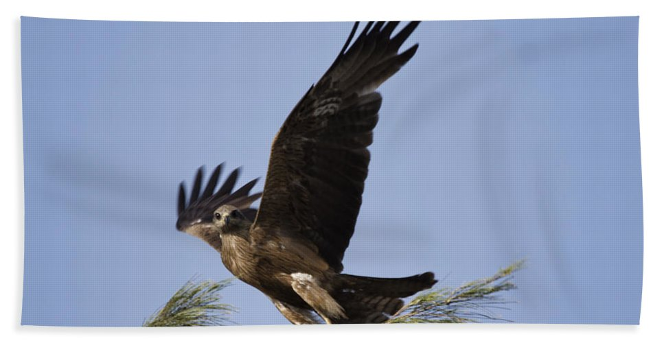 Kite Hand Towel featuring the photograph Balancing Act by Douglas Barnard