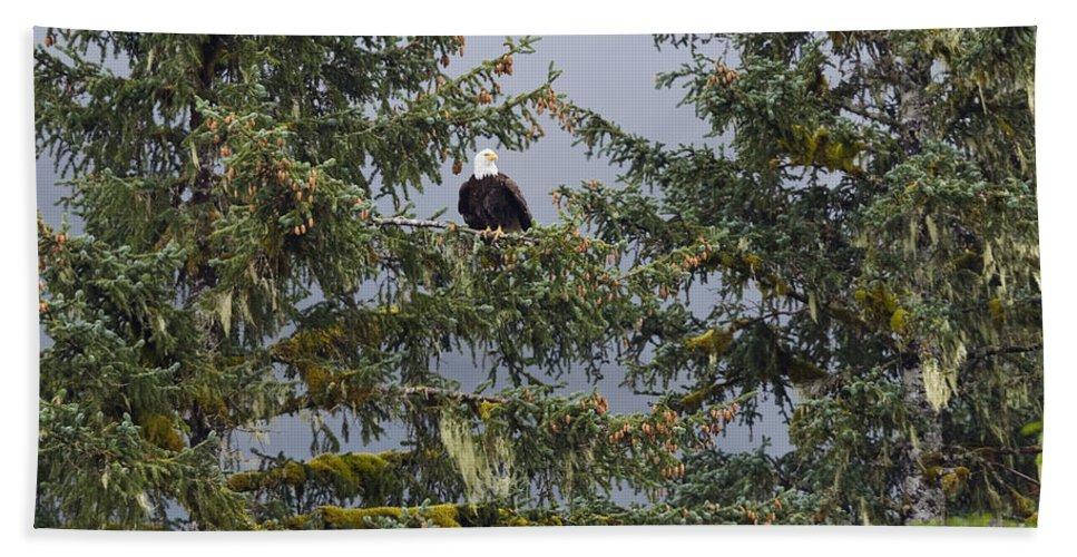 Mp Hand Towel featuring the photograph Bald Eagle Haliaeetus Leucocephalus by Konrad Wothe
