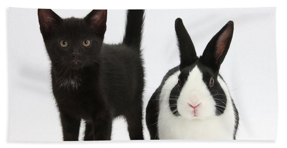 Nature Hand Towel featuring the photograph Black Kitten And Dutch Rabbit by Mark Taylor
