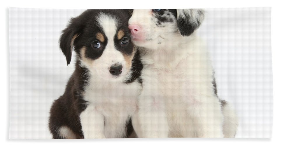Animal Hand Towel featuring the photograph Boreder Collie Puppies by Mark Taylor