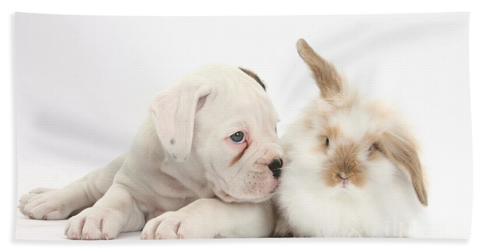 Boxer Hand Towel featuring the Boxer Puppy And Young Fluffy Rabbit by Mark Taylor