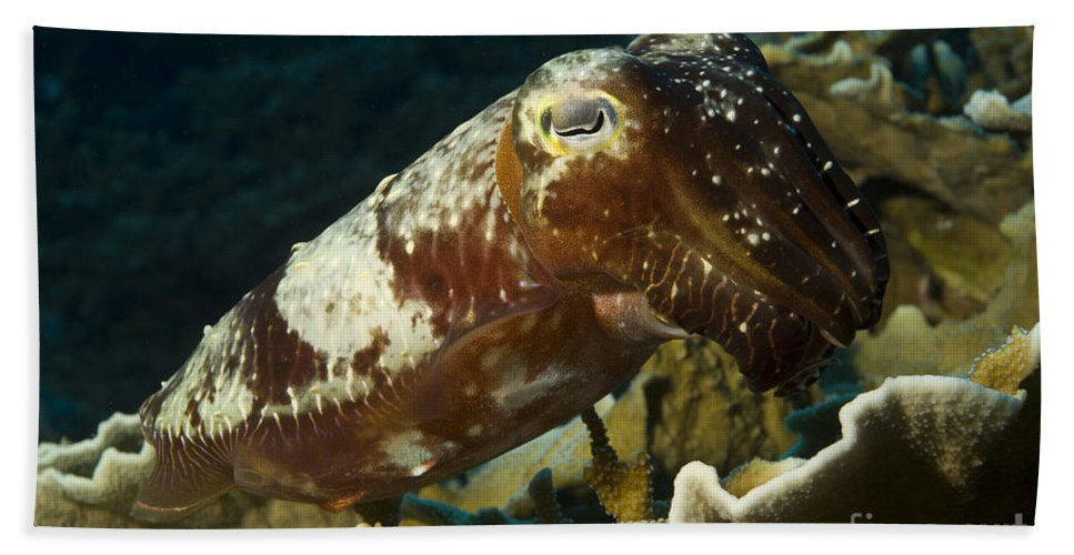 English Reef Bath Sheet featuring the photograph Broadclub Cuttlefish, Papua New Guinea by Steve Jones