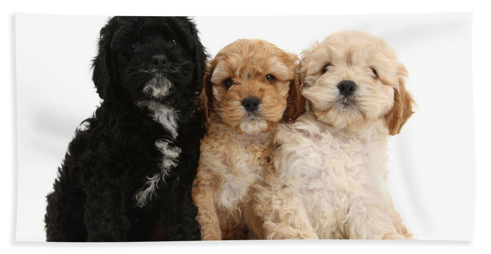 Animal Hand Towel featuring the photograph Cockerpoo Puppies by Mark Taylor