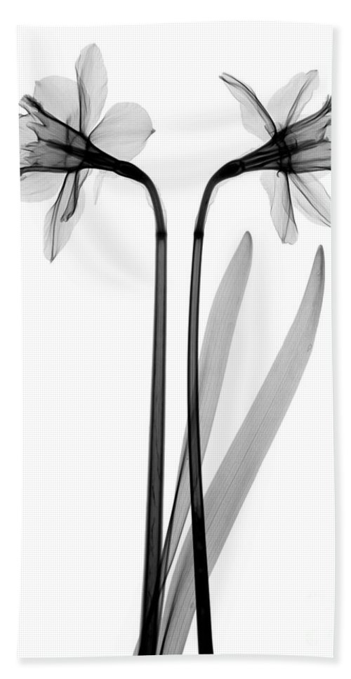 X-ray Hand Towel featuring the photograph Daffodils by Ted Kinsman
