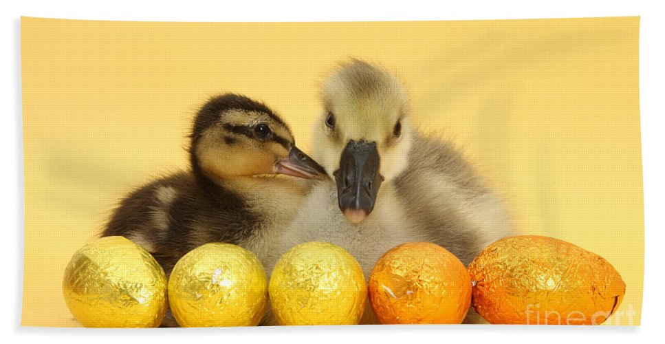 Nature Hand Towel featuring the photograph Embden X Greylag Gosling And Mallard by Mark Taylor