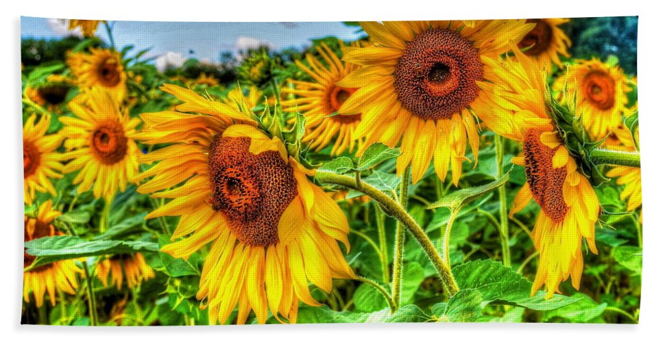 Sunflowers Hand Towel featuring the photograph Field Of Dreams by Debbi Granruth