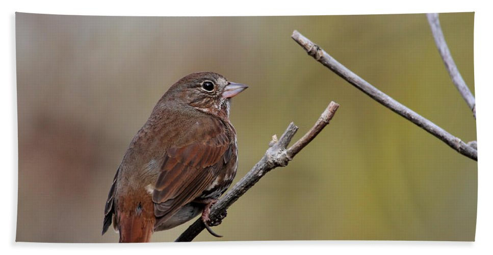 Doug Lloyd Hand Towel featuring the photograph Fox Sparrow by Doug Lloyd