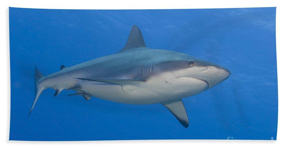 English Reef Bath Sheet featuring the photograph Gray Reef Shark. Papua New Guinea by Steve Jones