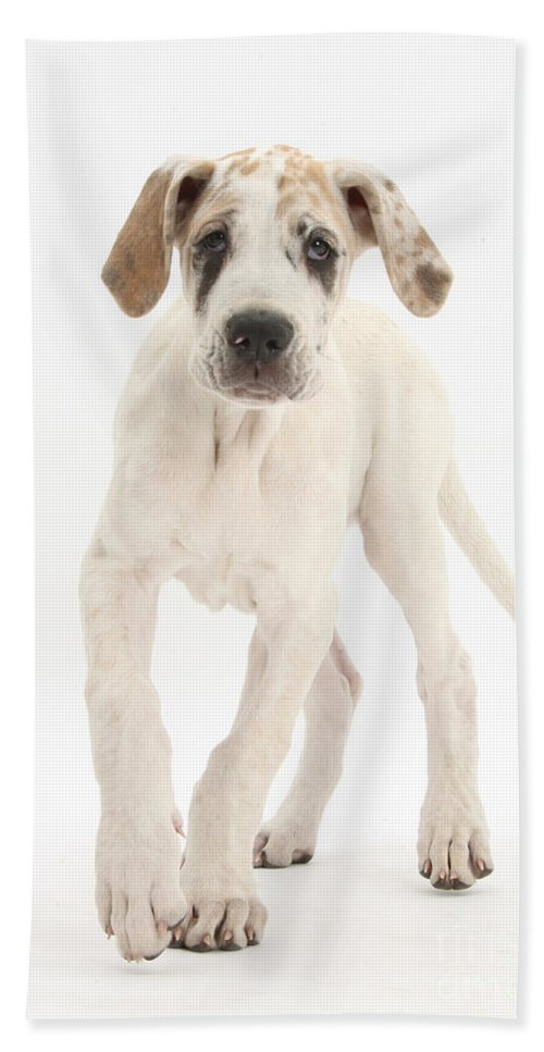 Nature Hand Towel featuring the photograph Great Dane Pup by Mark Taylor