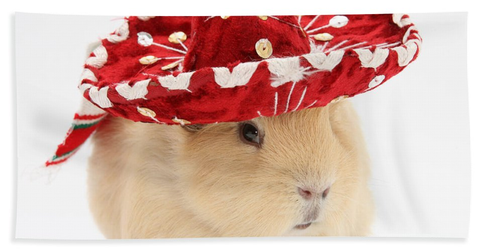 Animal Hand Towel featuring the photograph Guinea Pig Wearing A Hat by Mark Taylor