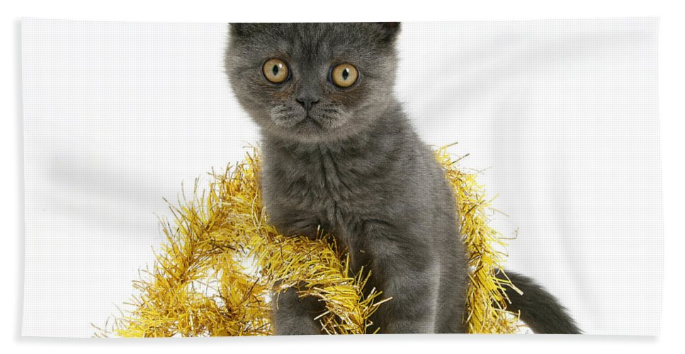 Animal Hand Towel featuring the photograph Kitten With Tinsel by Mark Taylor