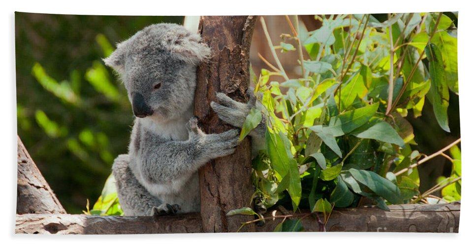 Animals Hand Towel featuring the digital art Koala by Carol Ailles