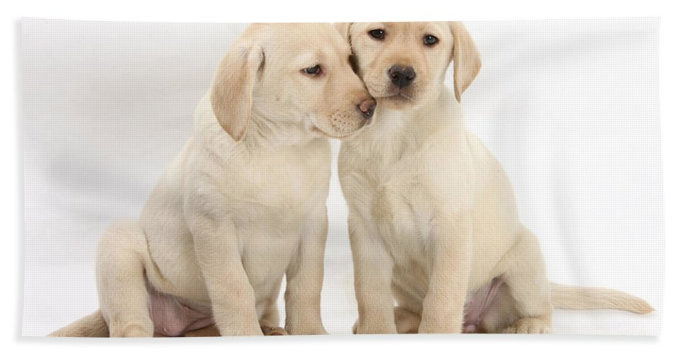 Animal Hand Towel featuring the photograph Labrador Retriever Puppies by Mark Taylor