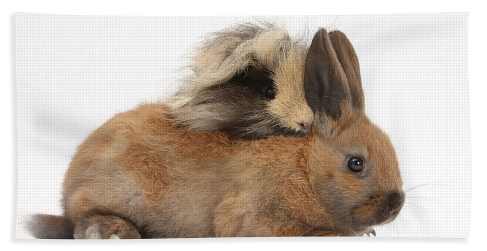 Nature Hand Towel featuring the photograph Long-haired Guinea Pig And Young Rabbit by Mark Taylor