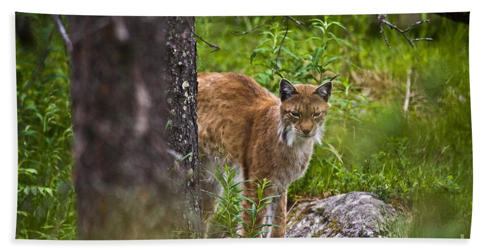 Nature Bath Sheet featuring the photograph Lynx by Heiko Koehrer-Wagner