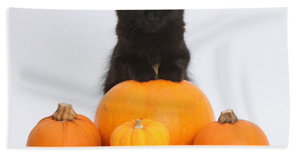 Animal Hand Towel featuring the photograph Maine Coon Kitten And Pumpkins by Mark Taylor