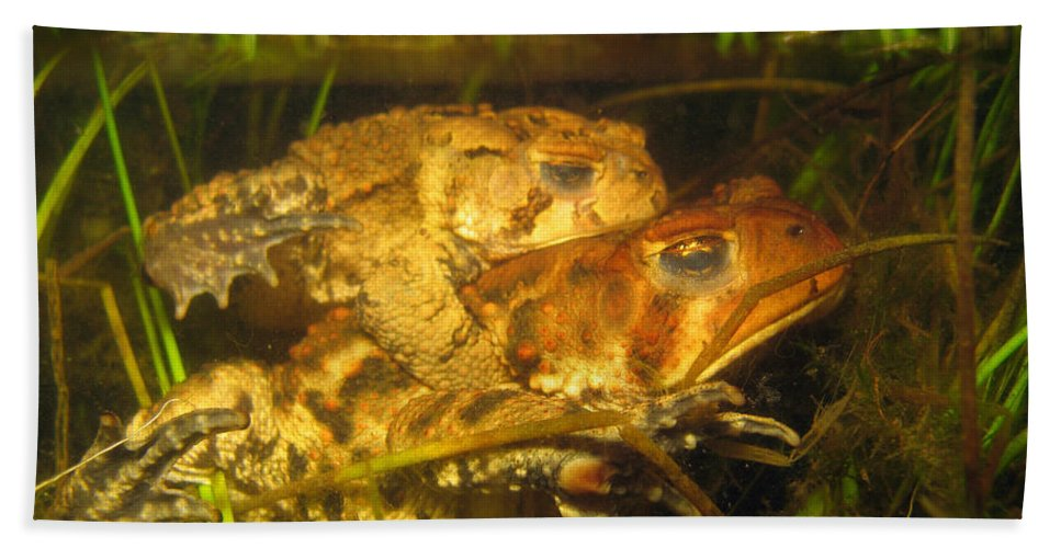 Amphibian Hand Towel featuring the photograph Mating Toads by Ted Kinsman