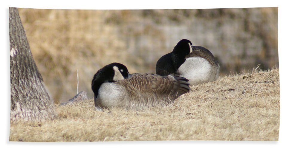 Goose Bath Sheet featuring the photograph Nap Time by Lori Tordsen