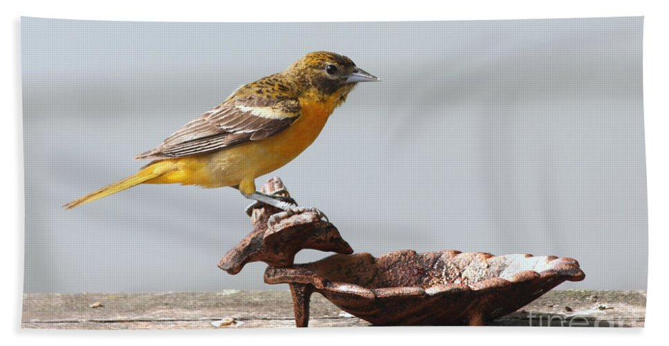 Oriole Bath Sheet featuring the photograph Oriole by Lori Tordsen
