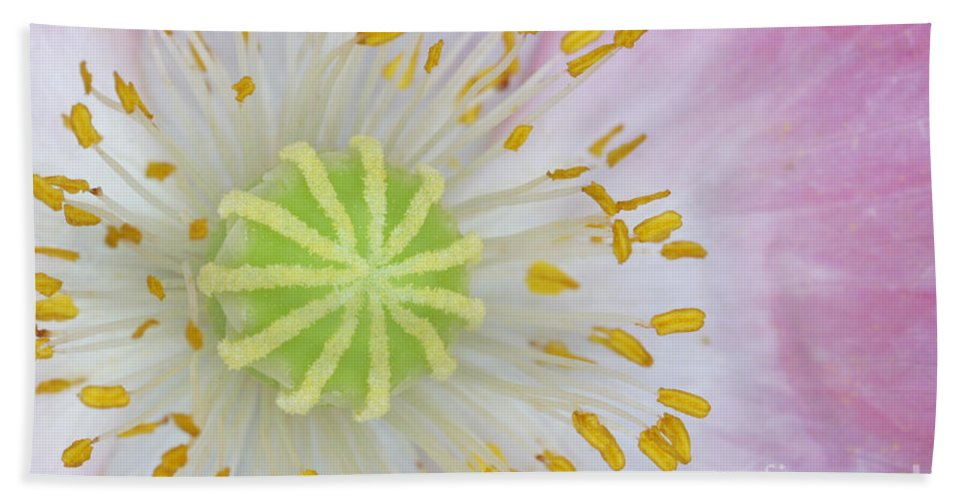 Plant Hand Towel featuring the photograph Ornamental Poppy by Ted Kinsman