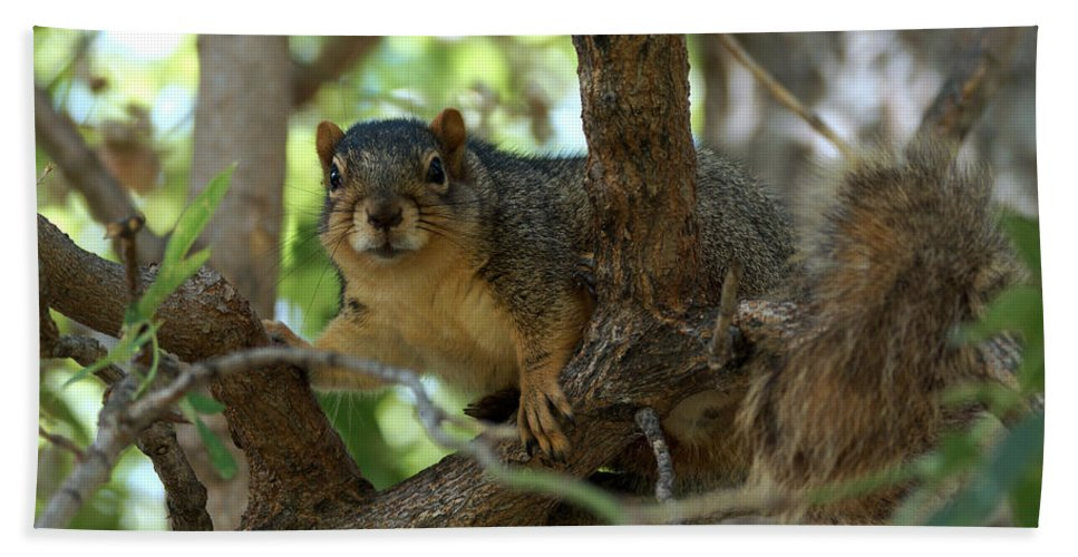 Squirrel Bath Sheet featuring the photograph Out On A Branch by Lori Tordsen