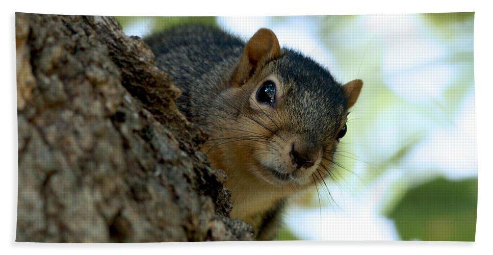 Squirrel Bath Sheet featuring the photograph Peak by Lori Tordsen