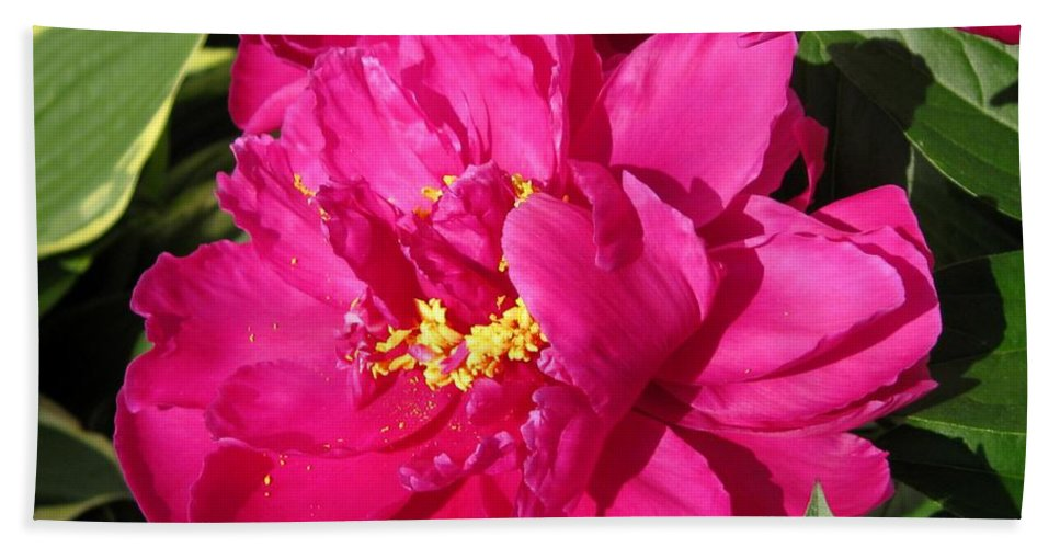 Peony Bath Sheet featuring the photograph Peony Named Karl Rosenfield by J McCombie