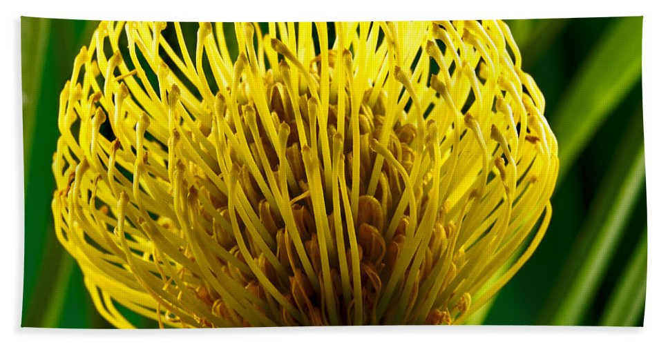 Flowers Bath Sheet featuring the photograph Picture Of A Pincushion Protea by Perla Copernik