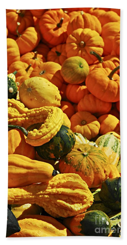 Pumpkin Hand Towel featuring the photograph Pumpkins And Gourds by Elena Elisseeva
