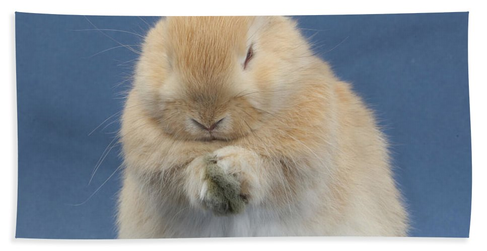 Nature Hand Towel featuring the photograph Rabbit Grooming by Mark Taylor