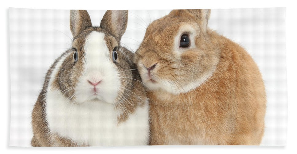 Nature Hand Towel featuring the photograph Rabbits by Mark Taylor