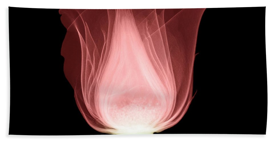 Radiograph Hand Towel featuring the photograph Rose by Ted Kinsman