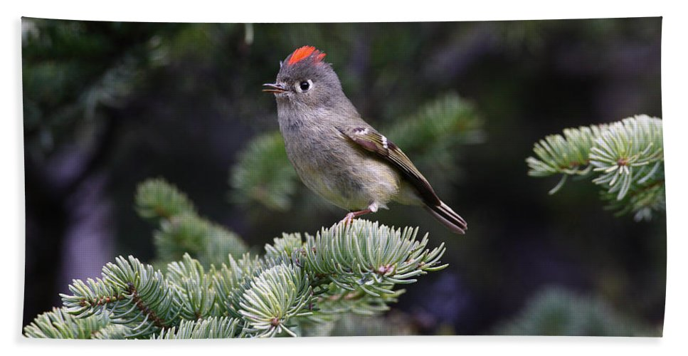 Doug Lloyd Hand Towel featuring the photograph Rubycrowned Kinglet by Doug Lloyd