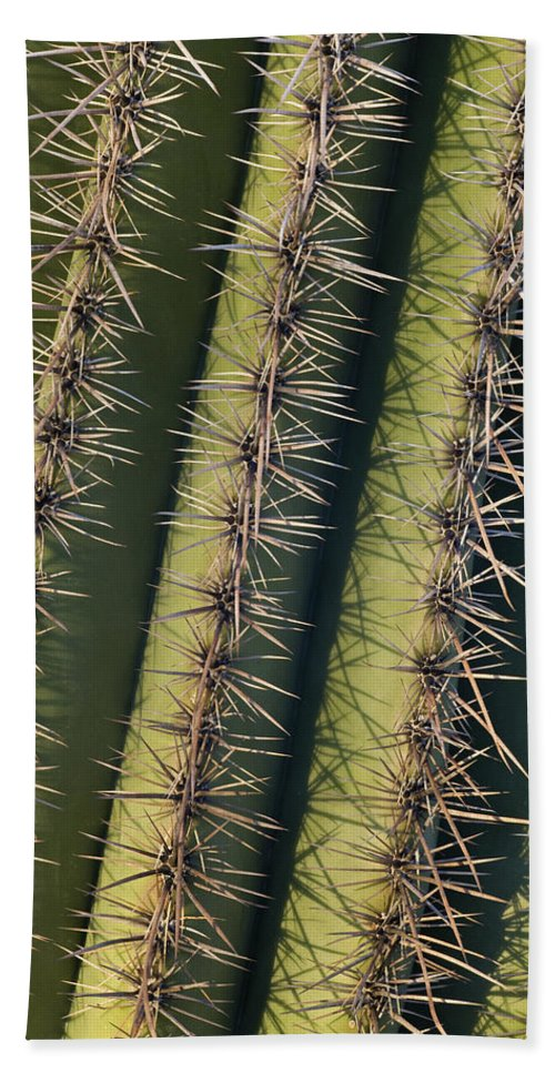 Mp Hand Towel featuring the photograph Saguaro Carnegiea Gigantea Cactus by Ingo Arndt