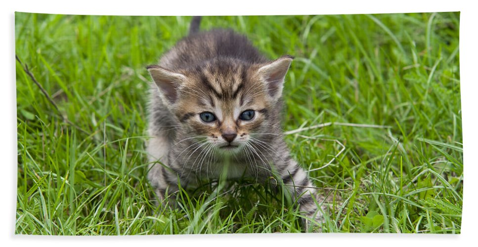 Adorable Bath Sheet featuring the photograph Small Kitten In The Grass by Michal Boubin