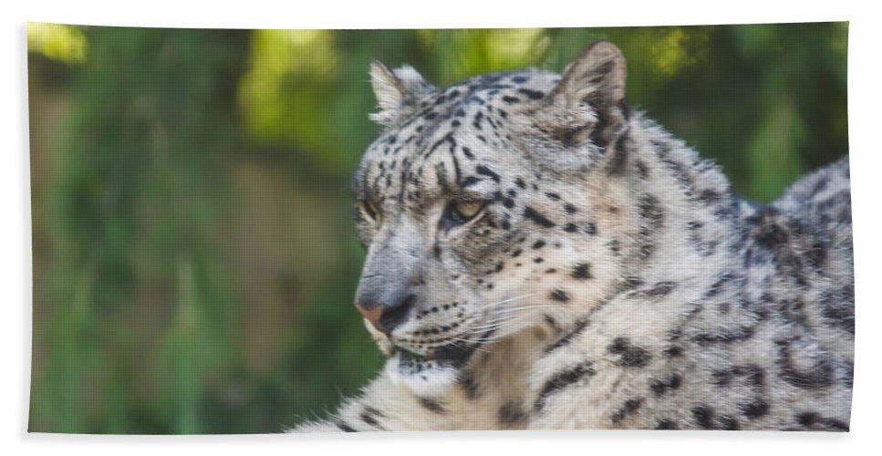 Dawn Oconnor Dawnoconnorphotos@gmail.com Hand Towel featuring the photograph Snow Leopard by Dawn OConnor