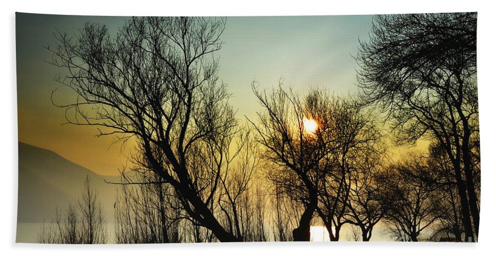 Tree Bath Sheet featuring the photograph Sunlight Between The Trees by Mats Silvan