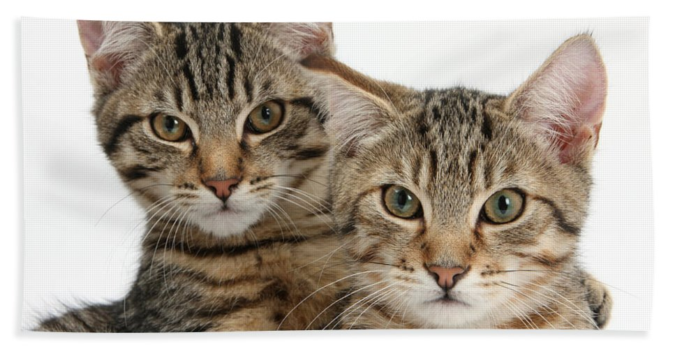 Nature Hand Towel featuring the photograph Tabby Kittens by Mark Taylor
