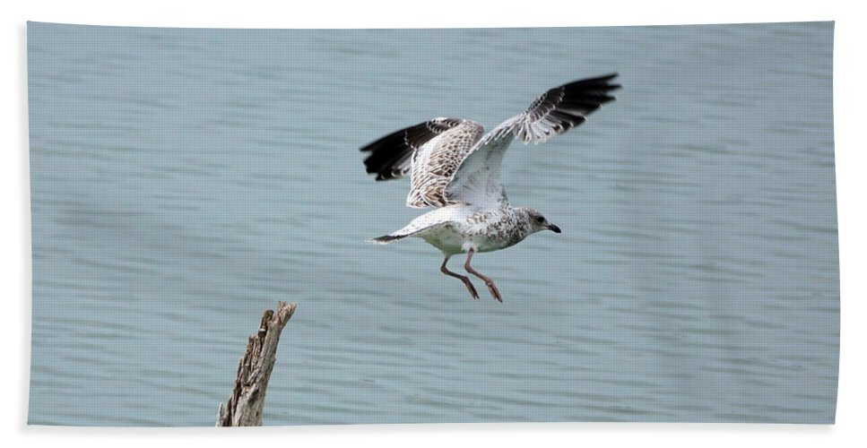 Seagull Bath Sheet featuring the photograph Take Off by Lori Tordsen