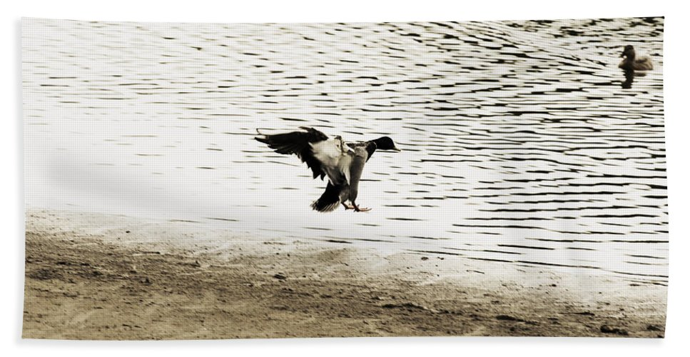 Mallard Duck Preparing To Land Bath Sheet featuring the photograph The Landing by Douglas Barnard