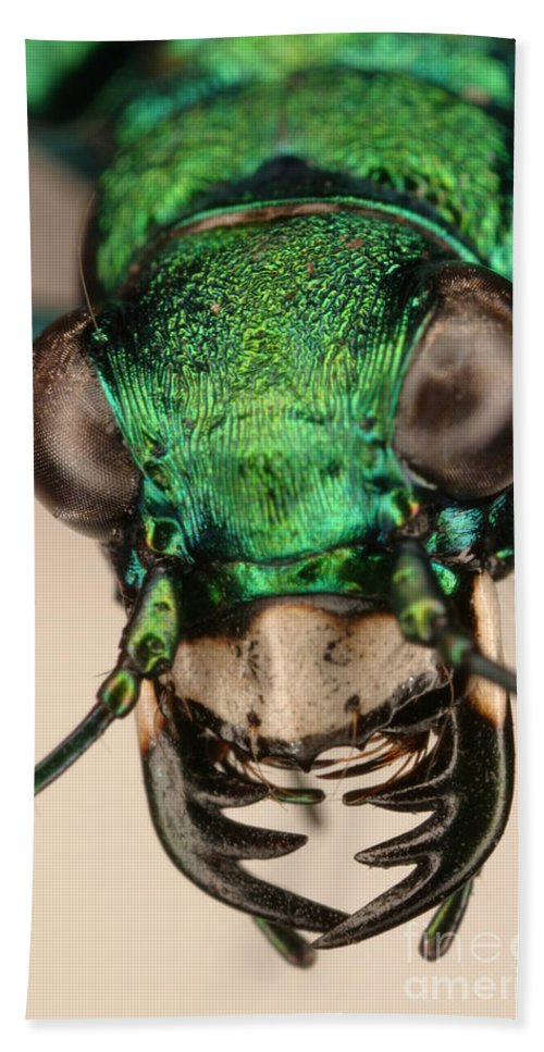 Tiger Beetle Hand Towel featuring the photograph Tiger Beetle by Ted Kinsman
