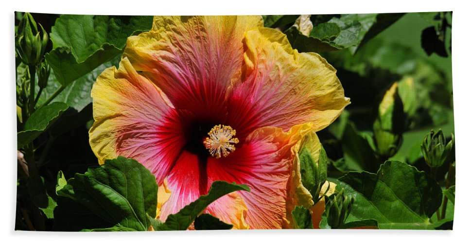 Hibiscus Bath Sheet featuring the photograph Tropical Beauty by Lynn Bauer